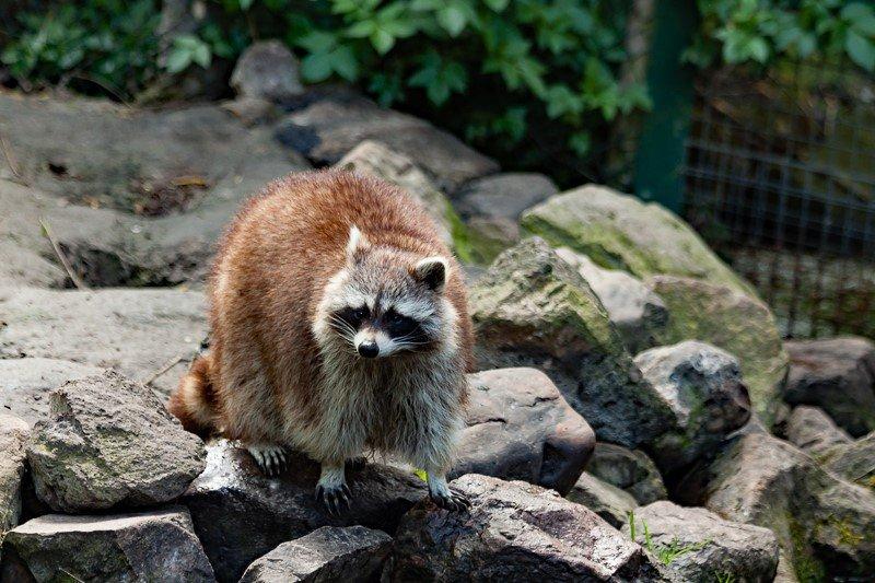 Aqua Zoo (10)