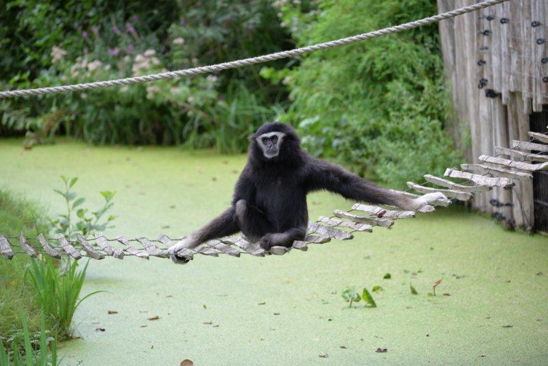 Aqua Zoo (6)