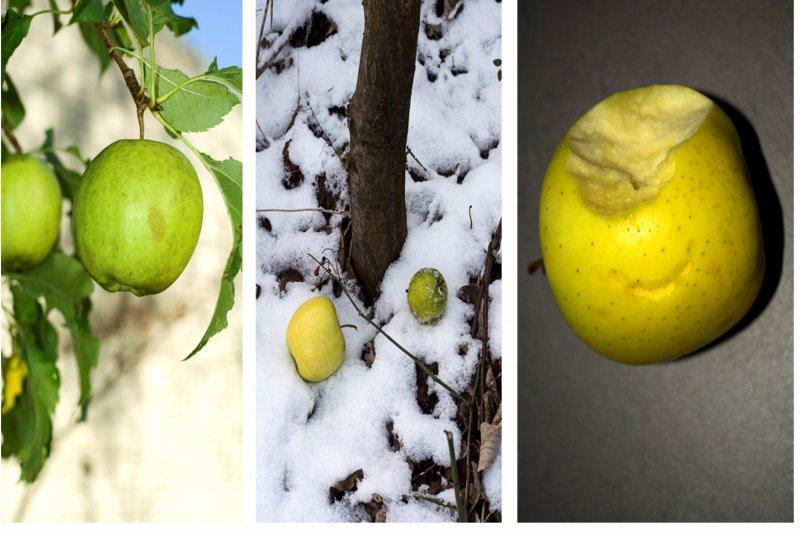 De appel valt niet ver van de boom
